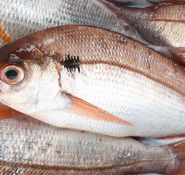 La pezzogna: uno dei pesci più squisiti dei nostri mari